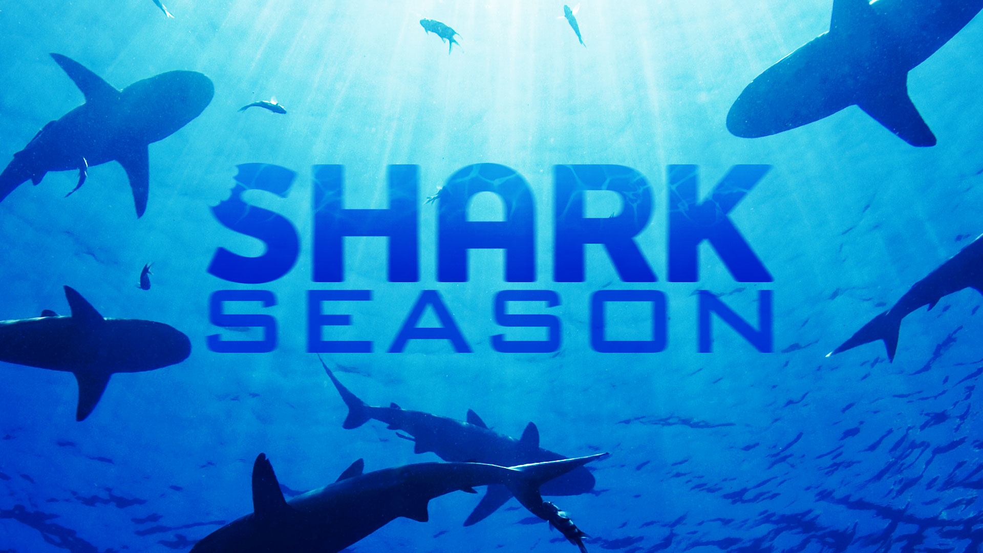 WSPA-Shark-Season-050416-cc
